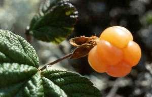 fruit a maturité